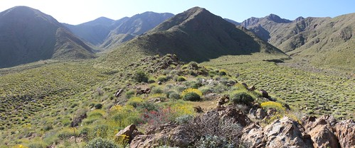 347 Panorama shot looking southeast from a ridge in Indian Canyon - it's all green and yellow | by _JFR_