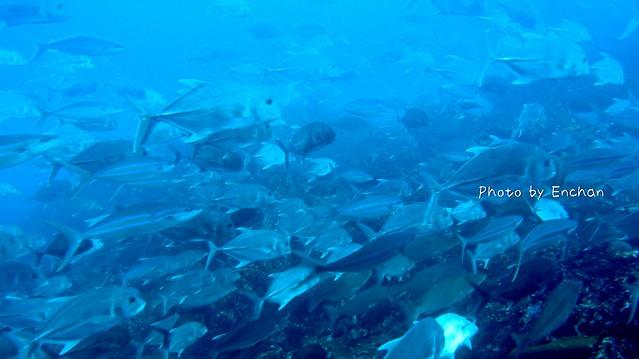 この魚群。ずっとこれです。