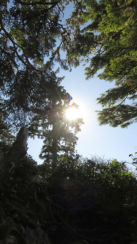 Sunlight through the trees on the Wild Pacific Trail in Ucluelet on Vancouver Island, Canada