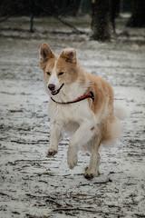 Hund 1b.jpg