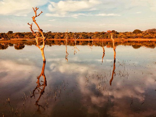 iphone8 reflection deadtree tree water lake sunrise cinnamonwild srilanka yala iphone8plusbackdualcamera399mmf18