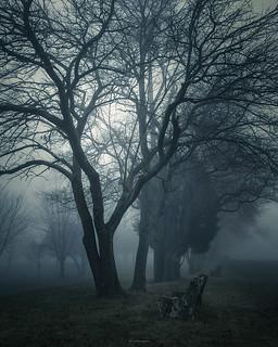 WONDERINGS | by Nenad Spasojevic