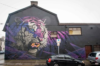 Sonny - Purple Tiger in Waterford-3   by streetartunitedstates