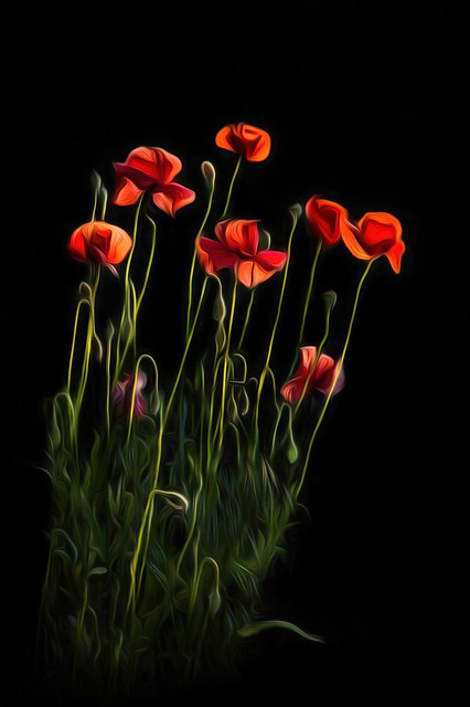 Moonid/Poppies
