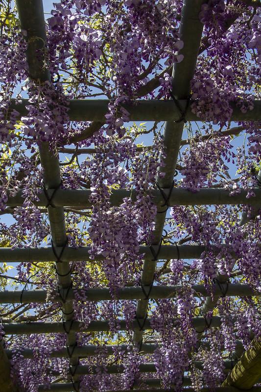 Hermann Park Blooms_26