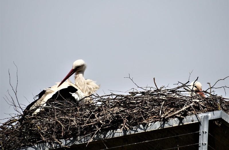 Stork 06.04 (7)