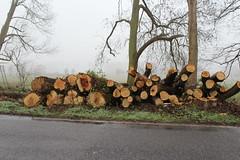 Baumfällungen Viersen