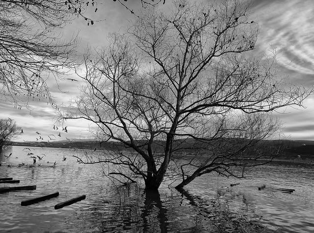 Gölyazı Lake