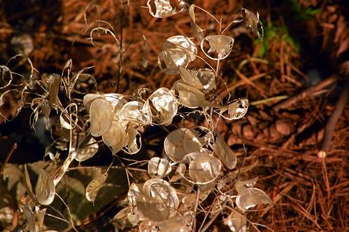 Silver Dollars | by pmvarsa