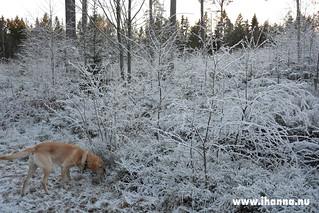Dog walk | by iHanna