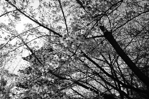 03-04-2019 Kyoto (99)