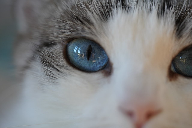 Biki blue eyes