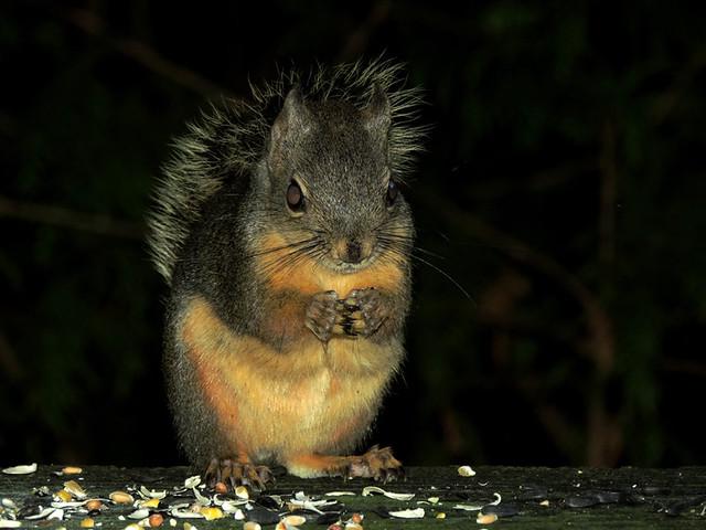 Canada - Fauna / Wildlife