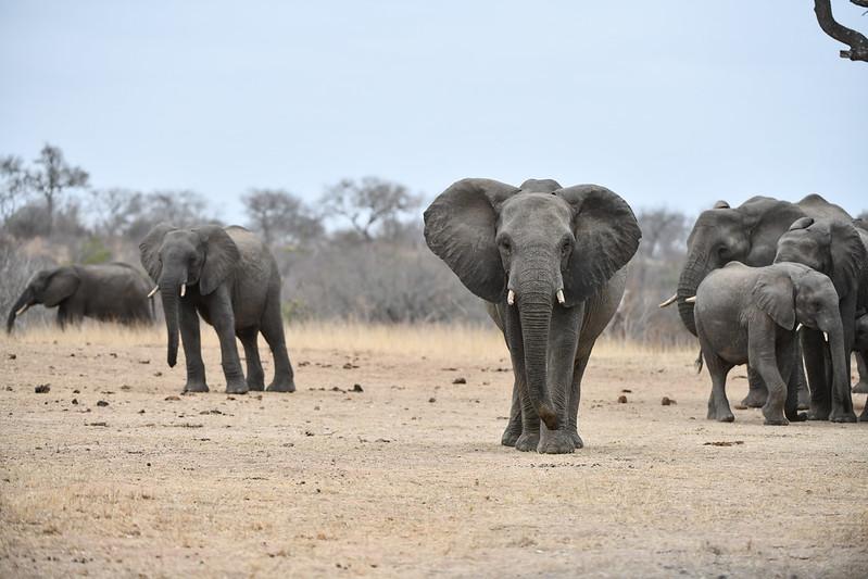 2254 Elephant