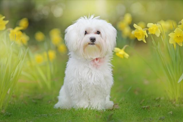 Daffodil Daisy...