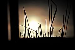 Grano e Sole