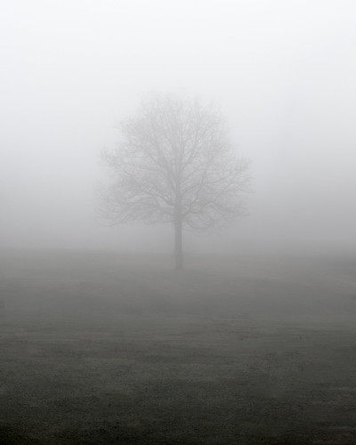 solitary tree fog mist morning wpiedu wpi worcester park institutepark grass sunrise minimalist peasoup