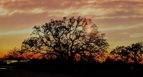 pixelphonephotography mobilephotography sunset sundown red tree silhouette contrast flare clouds dusk weather sky horizonline colorful bright outdoors view panorama texas winter