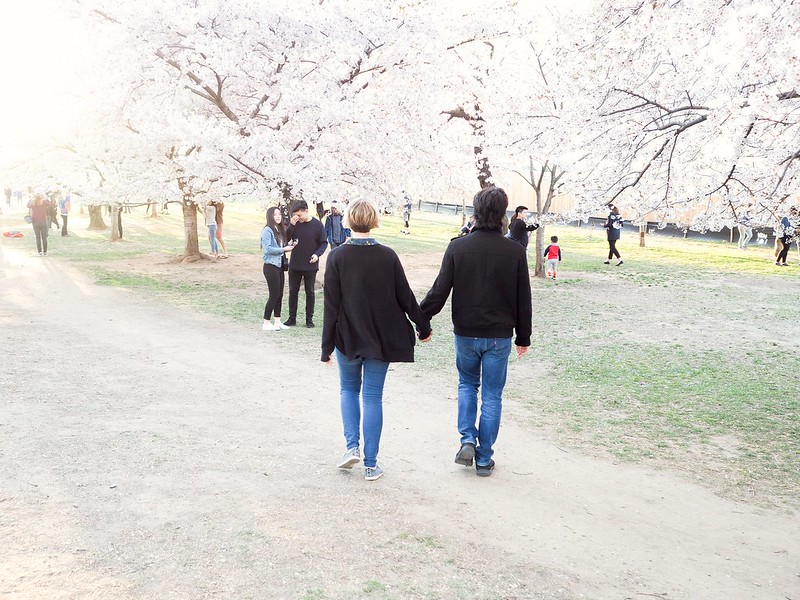 Walking through the cherry blossoms