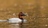 On Golden Water by Rick Derevan