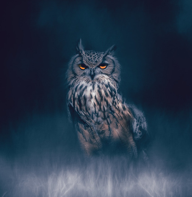The crow wished everything was black, The owl, that was everything white.   ~William Blake~