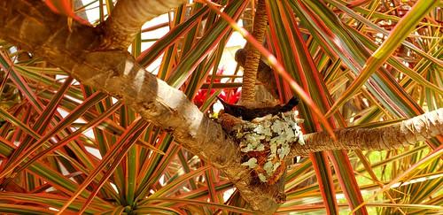 Berços da Vida ( Nest of Hummingbird)