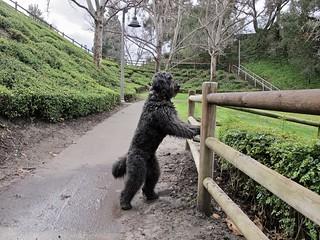 Benni checks out the park | by Bennilover