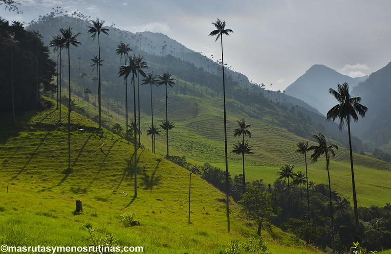 Palmeando por COLOMBIA