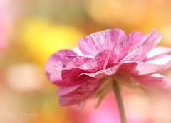 The Flower Fields 3.30.19 1
