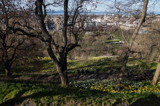 Edinburgh Daffodils in Spring March 2019-5