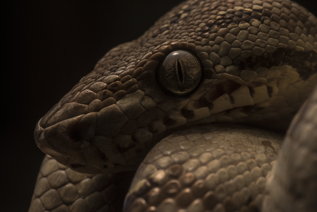 Glamour Snake Shot