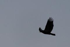 Eagle - Palisade, Colorado