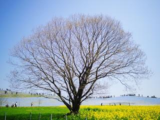 Itachi Seaside Park - Spring 2016