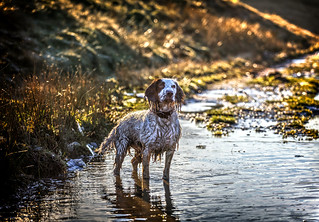 In the puddles again! | by Missy Jussy