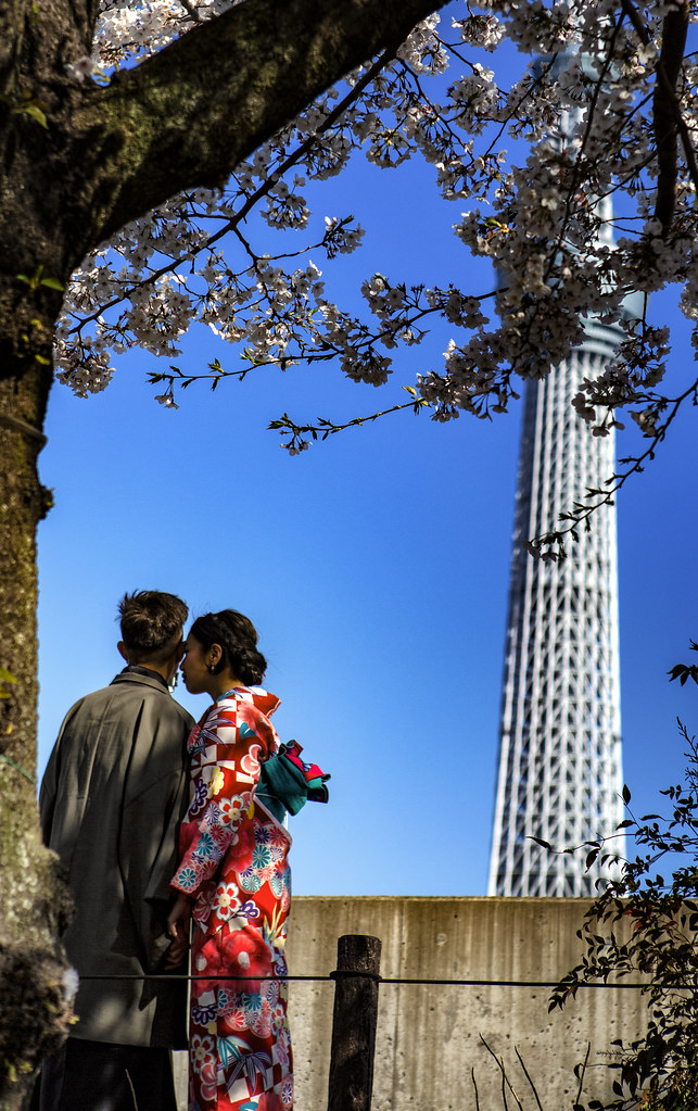 Romance In Tokyo Under Cherry Blossom