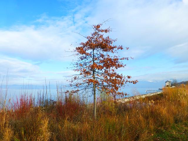 12.31.18.Lac Léman