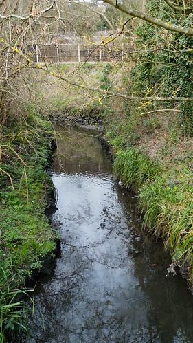 Confluence: Graiseley Brook / Smestow Brook