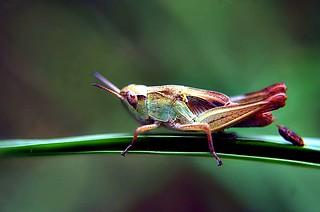 Grasshopper | by noelcmn