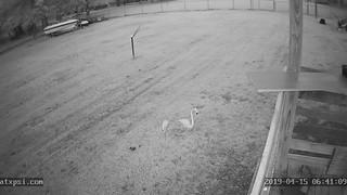 East | by Roberts Texas Bird Feeder Cam