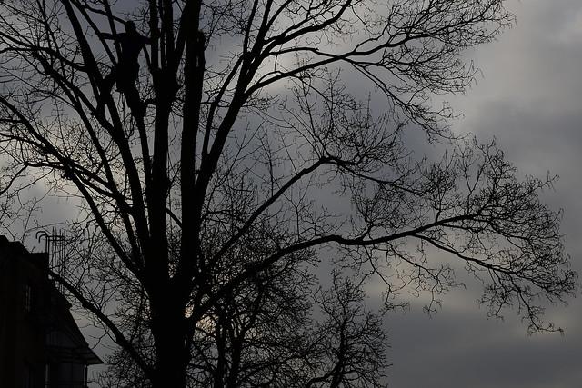 gray black tree house