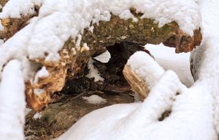 Snowy Wood Tunnel, 2019-02 | by Savanni D'Gerinel