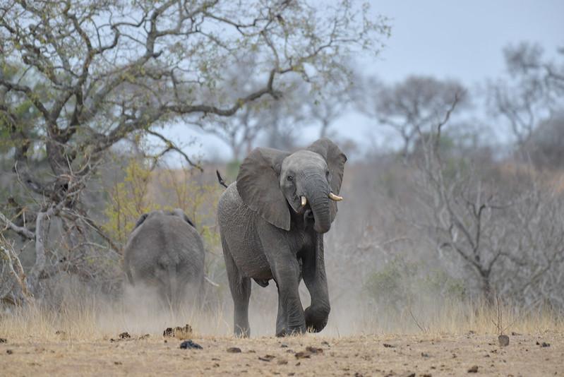 2248 Elephant