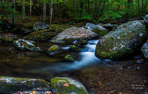 "gsmnp landscape fx outdoor f28 24mm d750 nikon copyright color yellow red black blue green orange tree trees leaves leaf lightroom diffused light sunshine shade natural depth field pictures spring summer autumn fall winter 2017 2018 flower grass escape fairytale wonderland forest ""natural light"" photographer golden hour travel sun prime primes water stream torrent flood river rock boulder covered moss park national mountains smoky great frame full"