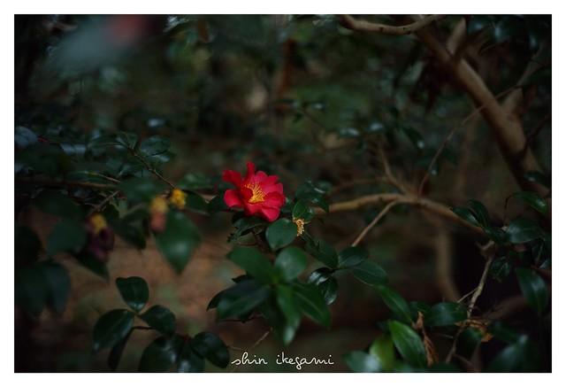 2019/2/11 - 11/12 photo by shin ikegami. - SONY ILCE‑7M2 / Voigtlander NOKTON CLASSIC 40mm f1.4 SC VM