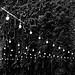 little lights 💡