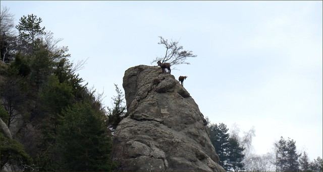 Leçon d'escalade