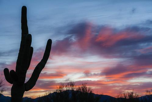 50mm f18 ii canon 5d mk2 arizona cactus dawn desertlandscape nature prime saguaro sunrise 50mmf18ii canon5dmk2