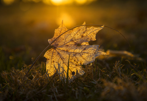 leaf leaves spring bokeh sunset golden springtime goldenhour macro canon 2019 life nature home landscape evening sun beautiful april