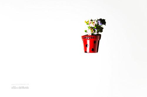 Recuerdos que no marchitan | by Diego Jambrina Merino
