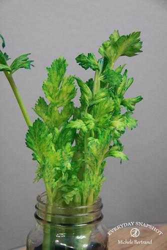 Celery Day 3-4